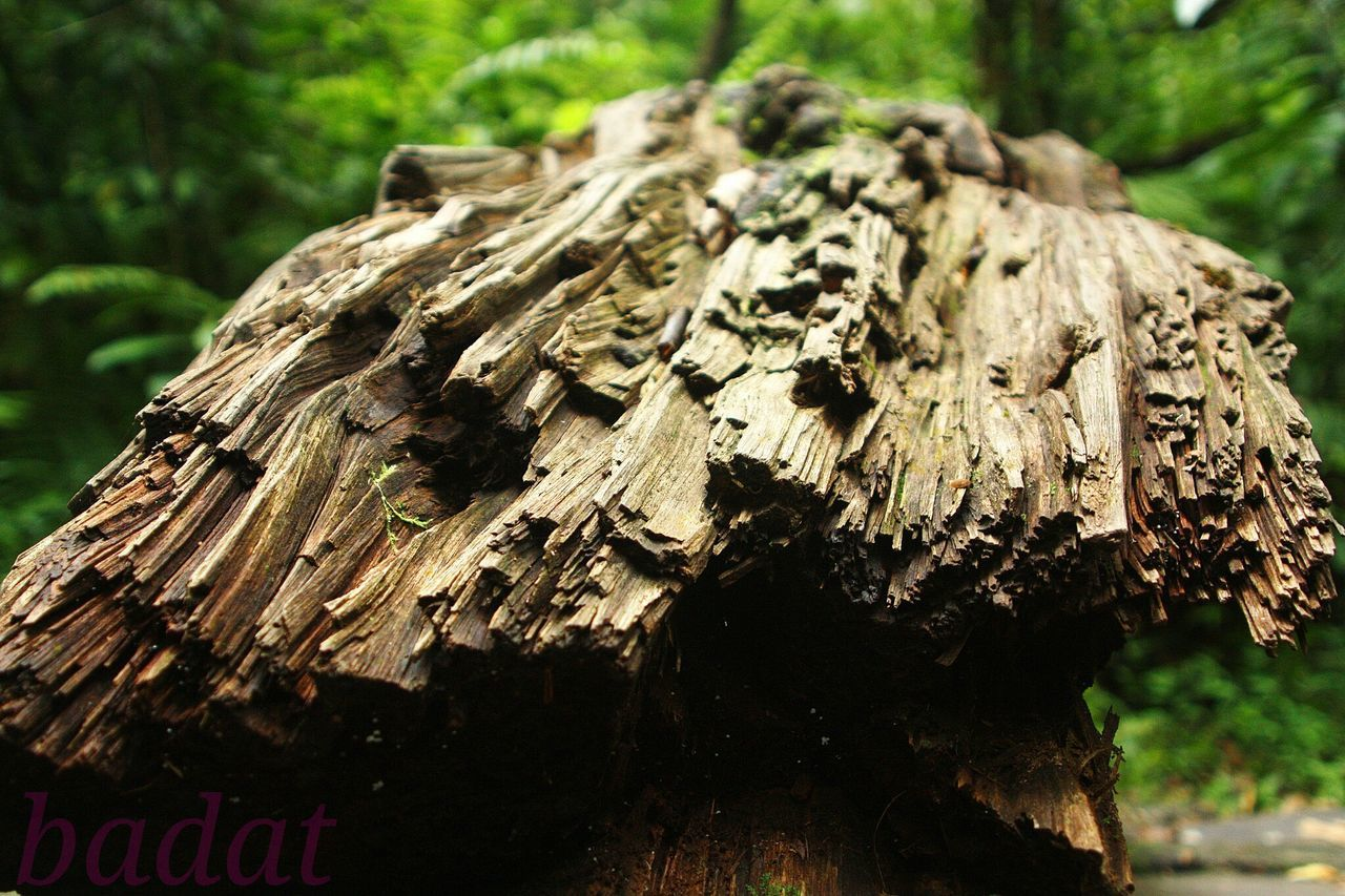 Natural Nature_collection Nature Woodstructure Wood Woods Wooden Wood Art Wooden Texture Cracked Tree Old Tree Old Tree In The Middle Of The Road!