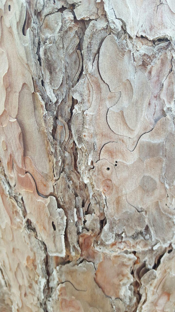Close-Up Of Bark