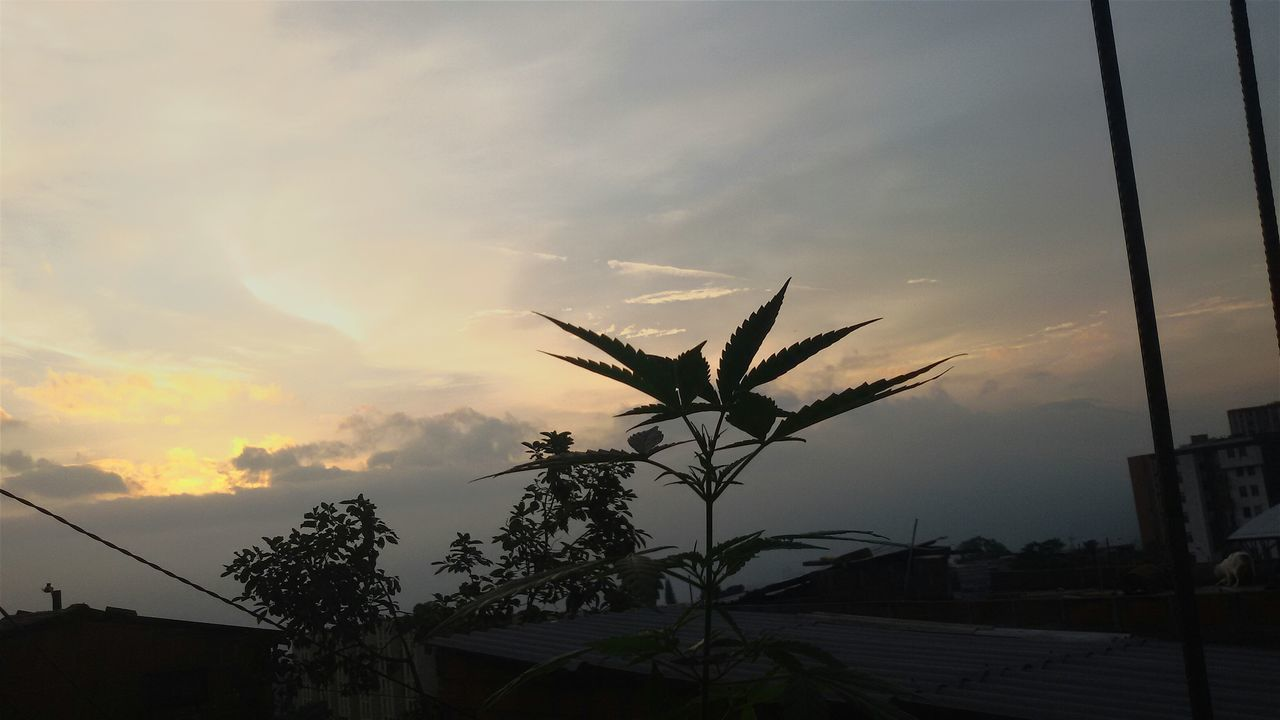 ☆☆Good Morning From Medellin Colombia for All The World!!☆☆ Culturicemos El Cannabis!!!