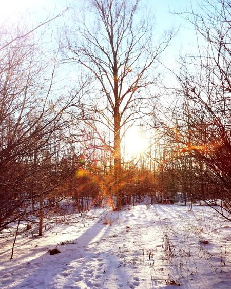 Winter Snow Cold Temperature Tree Nature Sunlight Beauty In Nature No People Outdoors Sun Day Bare Tree Shades Of Nature