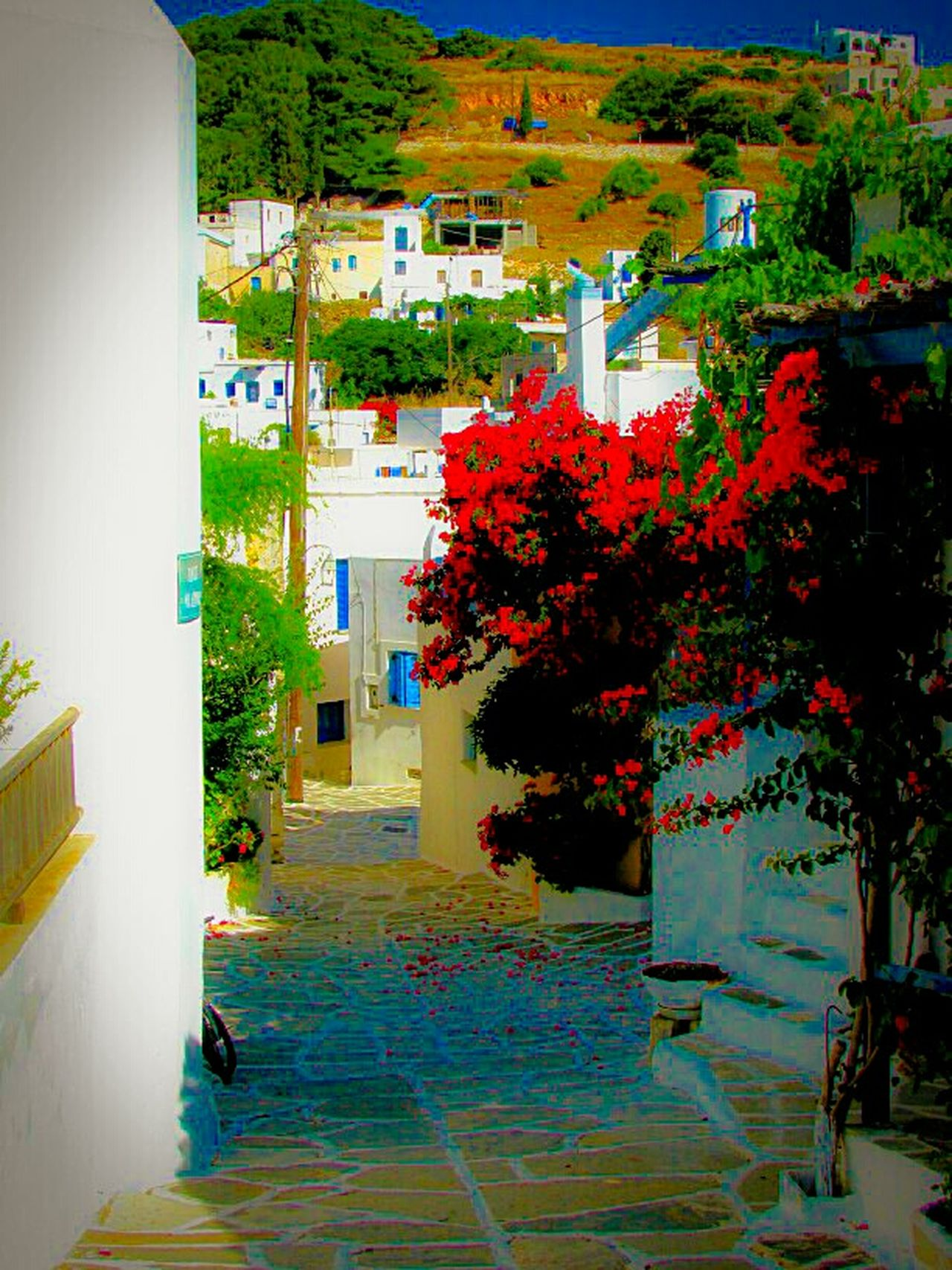 Q Quiet Places Alley Village Houses Bougainvillea Greek Islands No People Summer Memories 🌄 Summer Views Yeah Springtime! Nature On Your Doorstep Nature Human Vs Nature Paros Island Showcase March Shades Of Red Red Flowers Lefkes Stairs Best Of Stairways Urban Spring Fever Blossom Blooming