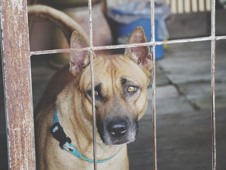 Beautiful stock photos of emotion, Animal Themes, Day, Dog, Domestic Animals
