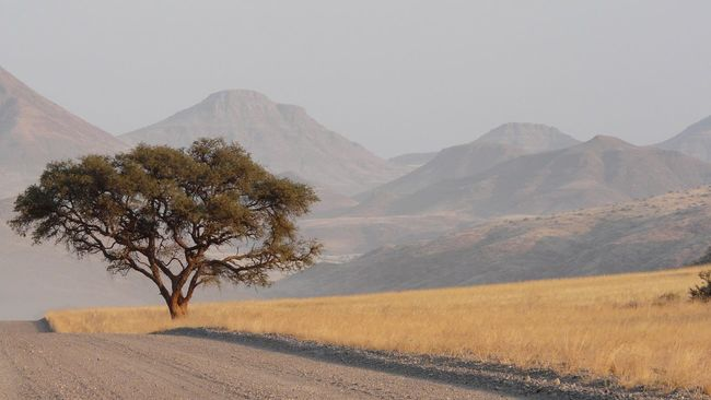 Landscape in Namibia Namibia Africa Landscape Landscape_Collection Landscape_photography Landscapes Nature Nature_collection Road Trees Tree Mountains Mountain Mountain View Twyfelfontein Earth