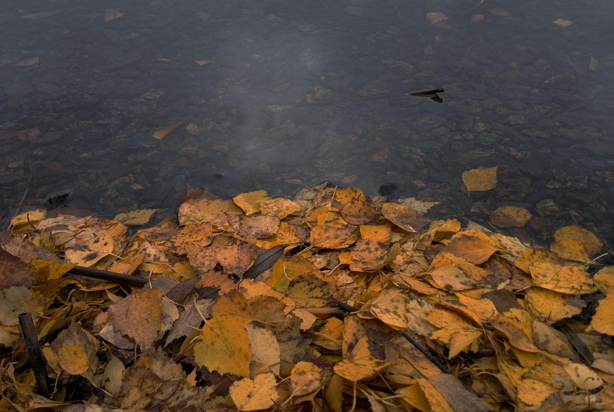 Melancholic Landscapes Autumn Colors Taking Photos Landscape