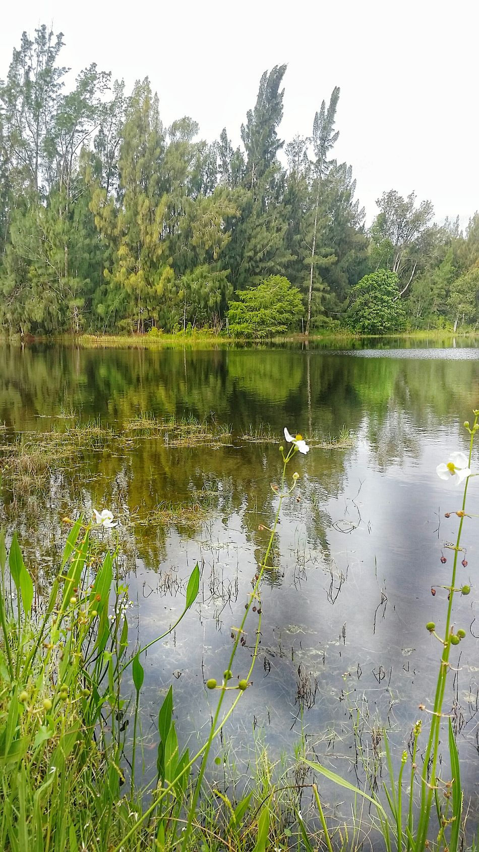 By the side of the lake, waiting for a peaceful day, a bright friend, balm for the soul... Landscape Beauty In Nature Wildflowers Landscapephotography Thoughts And Musings Solitude Landscape Nature Photography [