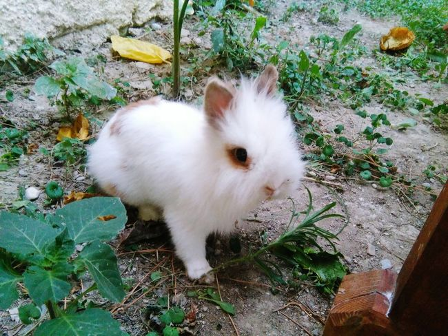 Cute Animal White Rabbit Animal Photography Animalcollection EyeEm Animal Lover Animal Portrait Inspired