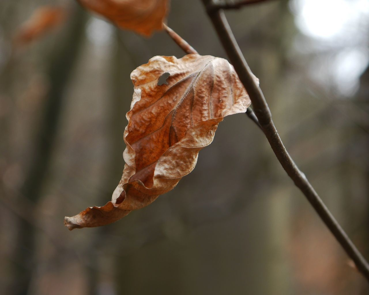 Leftover... Nature Close-up Plant No People Outdoors Day Beauty In Nature Fragility Leaf Branch Tree