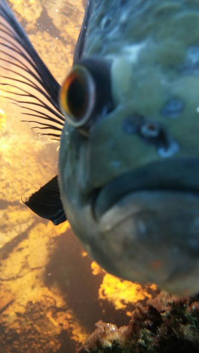 This is his good side Fish Half Face Typical Selfie Botanical Gardens Buffalo