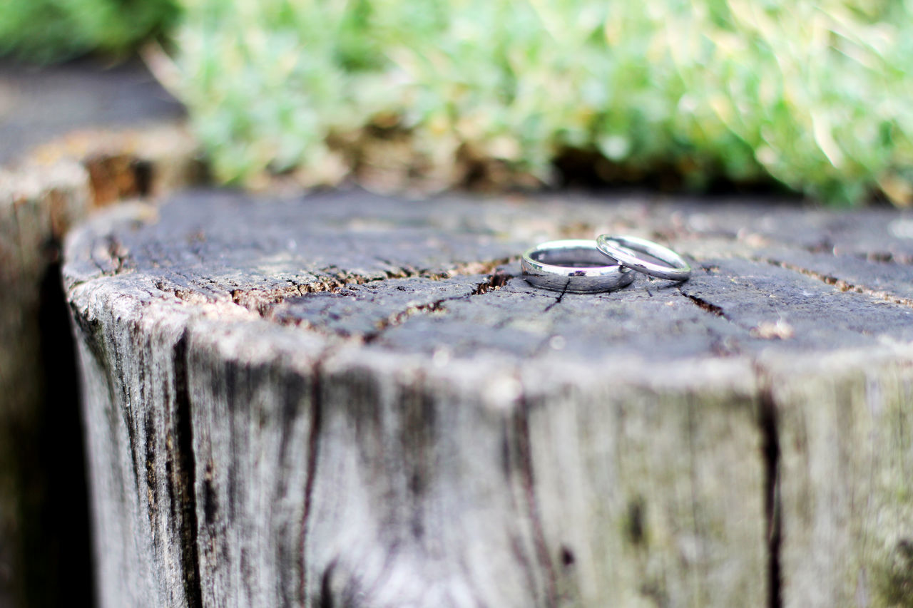 Close-up Day Nature Rings Wedding Wood