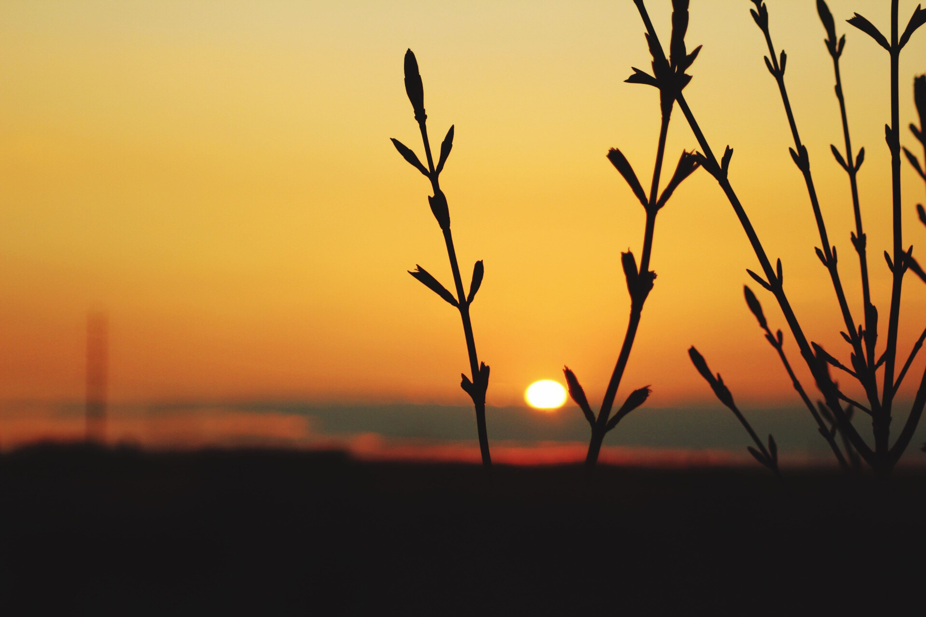 sunset, nature, orange color, growth, silhouette, beauty in nature, no people, sun, tranquility, close-up, outdoors, tranquil scene, sky, scenics, plant, day