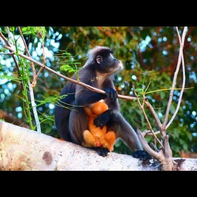 So cute Langkawai Monkeys Nature