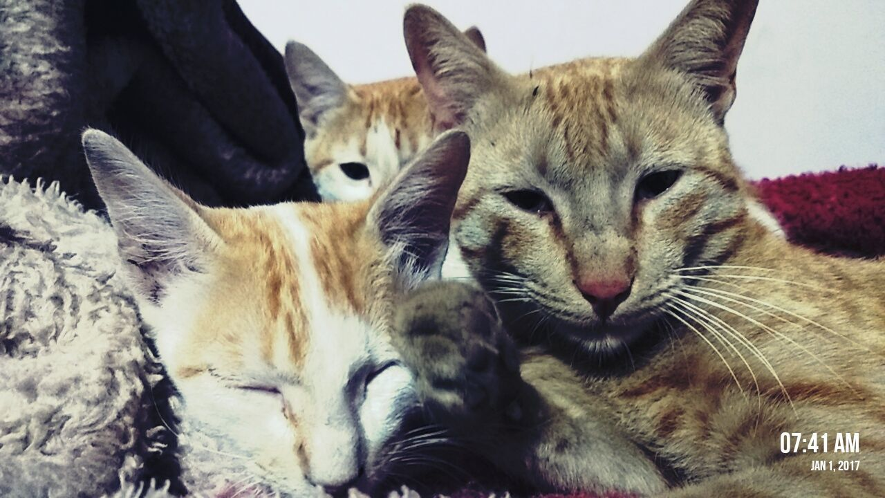 Animal Themes Domestic Animals No People Pets Togetherness Domestic Cat Close-up Cats Eyes Cats 🐱 Catch The Moment Feelingblessed Evencats Are Feelingcold Newyear NewYear2017 New Learn And Shoot: Simplicity Morning