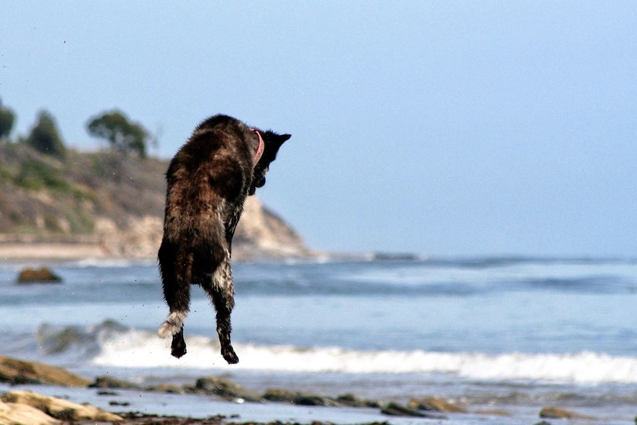 Beautiful stock photos of jump, Animal Themes, Beach, Blue, Clear Sky