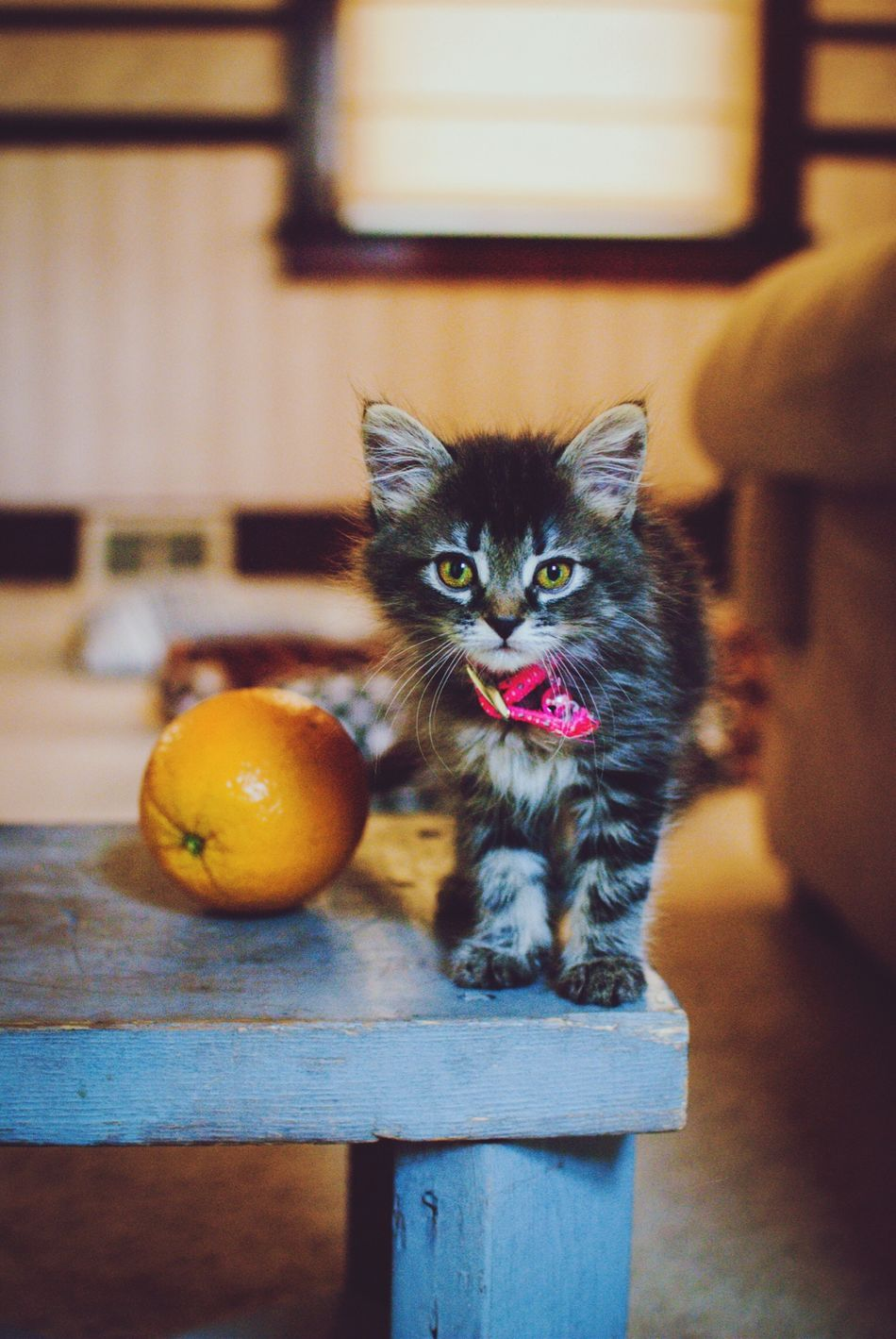 Molly Fitzgerald, 8 weeks old. Color Portrait Kitty Pet Love Orange Projectmollygrow