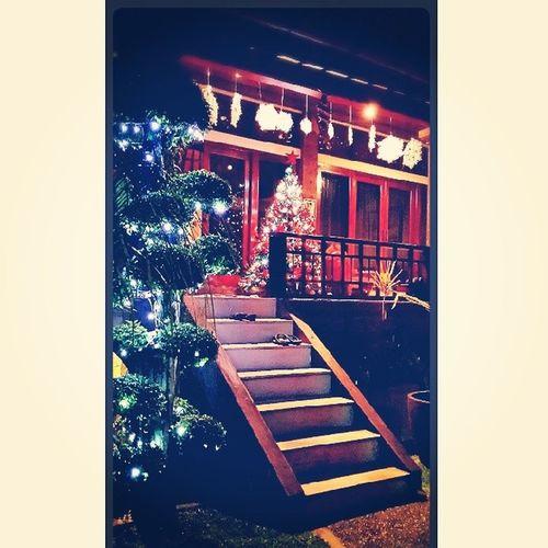 Lights fill the garden spreading so much cheer !^^