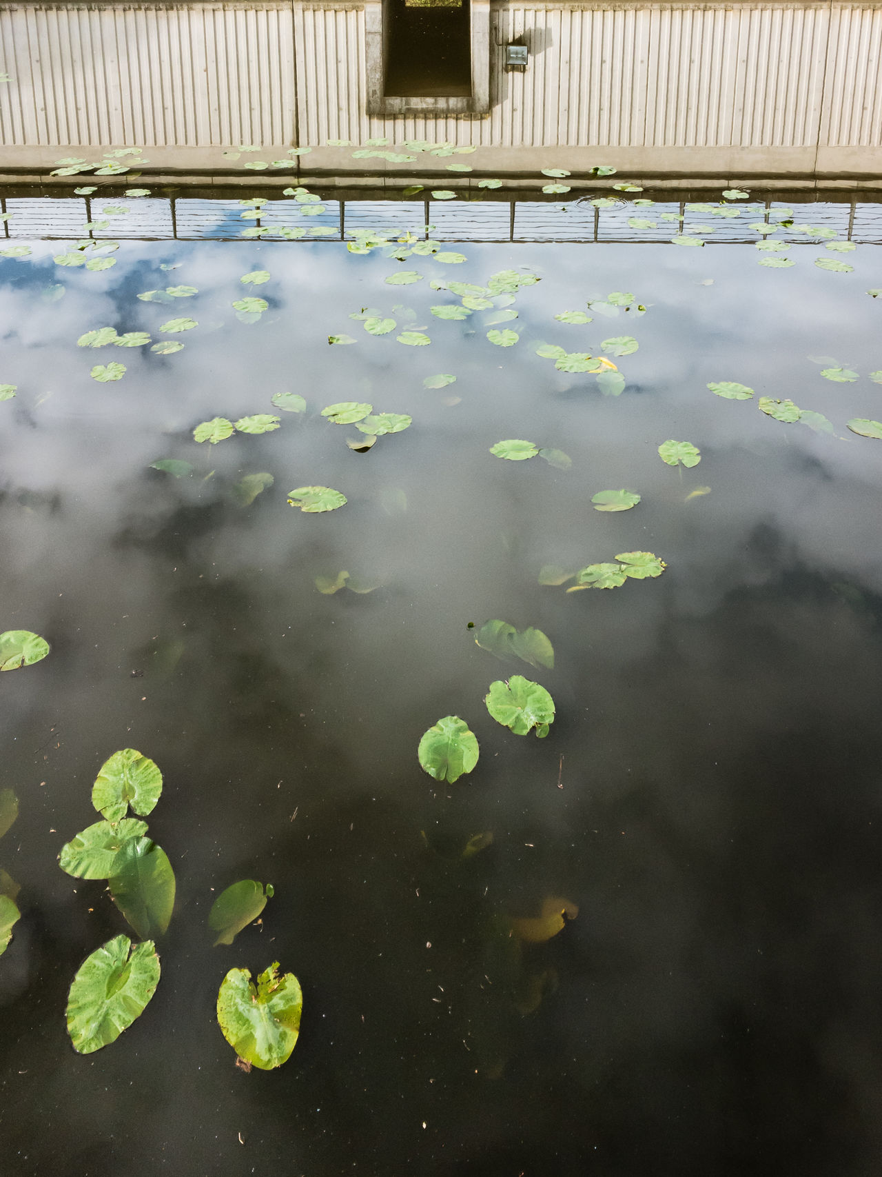 für Tabea Beauty In Nature Floating On Water Growth Leaf Man-made Structure No People Outdoors Swimming Water Water Lily Leaf