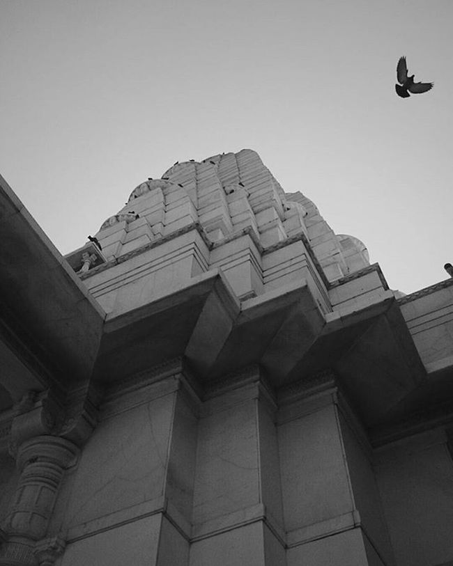 Serenity is found in abundance when you trade expectations for acceptance | always look up | b/w series | birla mandir | jaipur | rajasthan | travel diaries 2016 Shade And Shadow Blackandwhite Sky's The Limit Look Up Temple Serene Tranquil Outdoors Zig Zag Flying Bird Skyhigh Skyhasnolimit