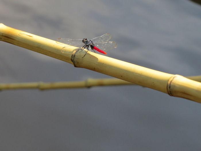 Amazon Amazon Rainforest Amazon River Amazonas Brazil Dragon Fly Insect Nature At Its Best Nature Up Close