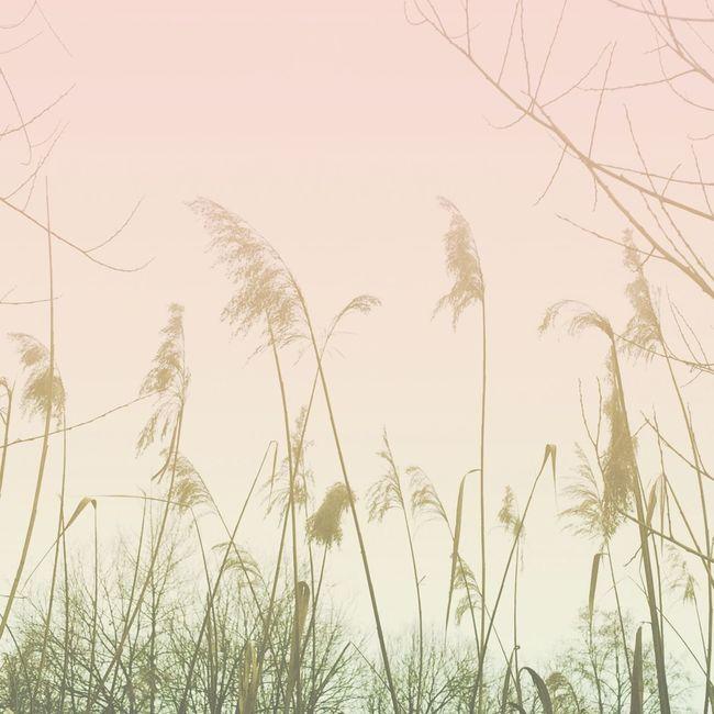Soft Switzerland Landscape Candyminimal Candyminimalism Nature Photography IPhoneography Acolorstory