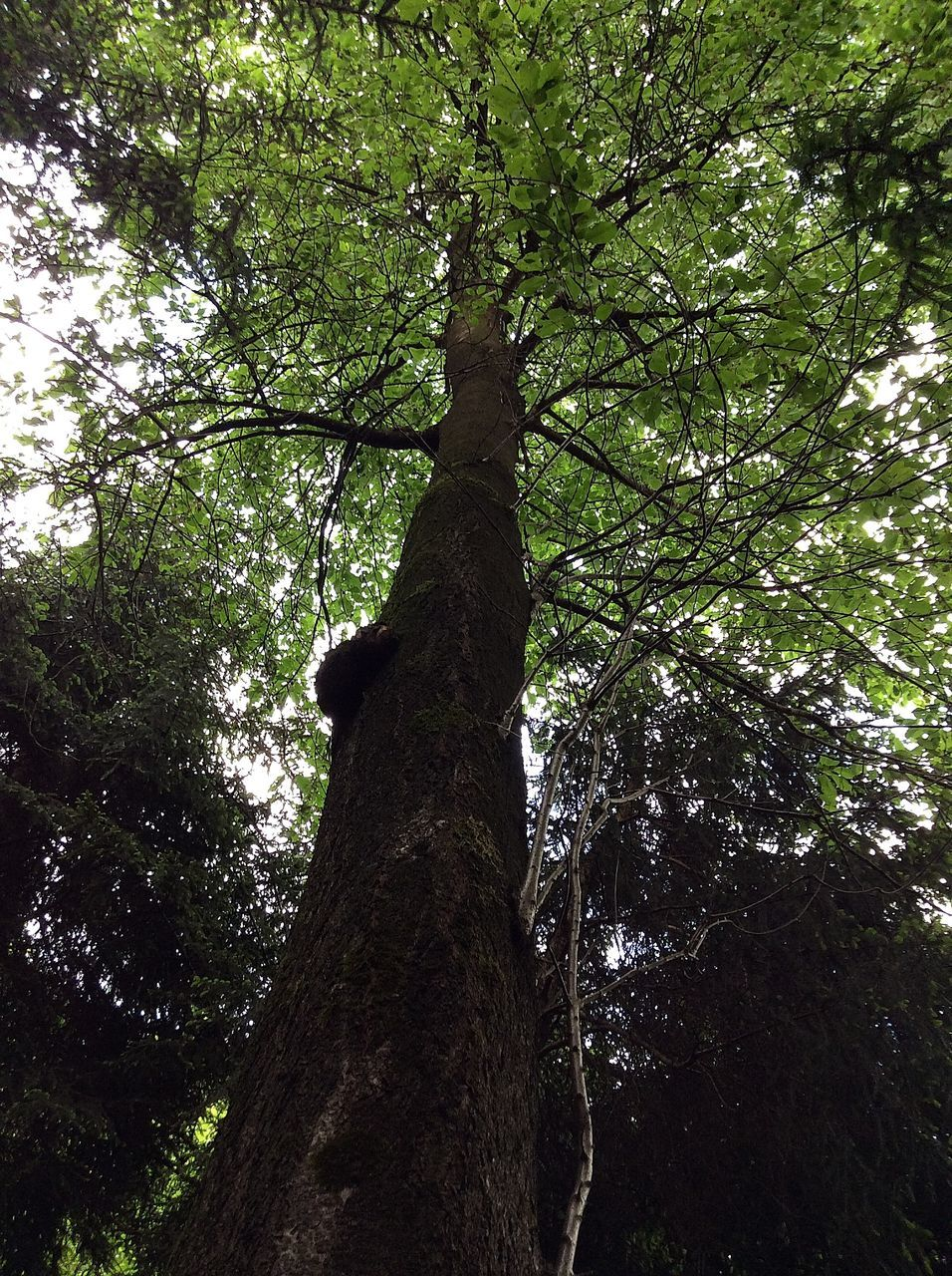tree, low angle view, nature, branch, tree trunk, growth, forest, no people, beauty in nature, green color, outdoors, day, sky