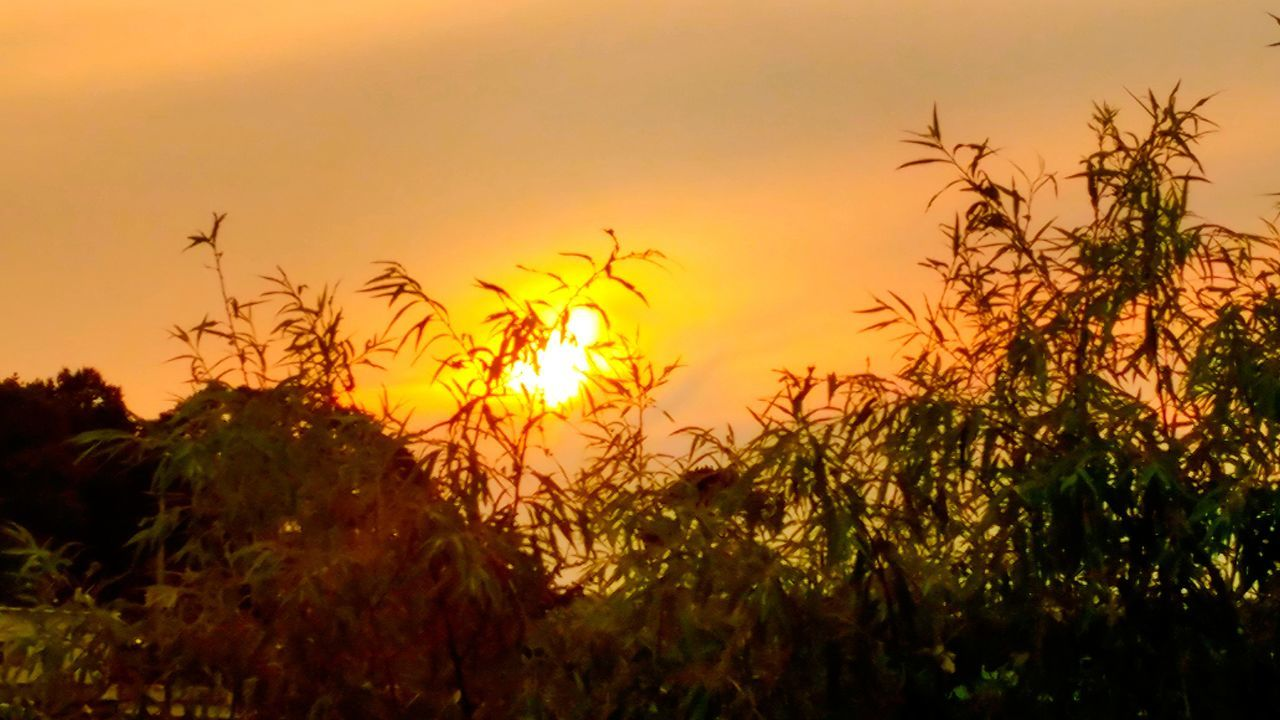 sunset, nature, growth, beauty in nature, plant, outdoors, tranquil scene, no people, tranquility, scenics, sky, sun, silhouette, field, yellow, flower, tree, grass, close-up, day