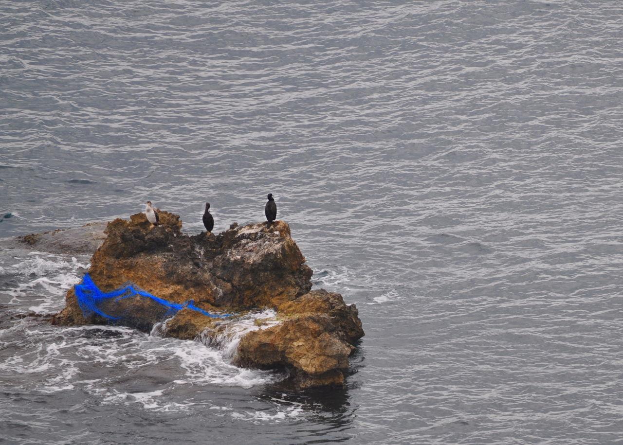 Balearic Islands Blue Fisher Net Ibiza Ibiza Town Mediterranean Sea Pitiusa Rocks Tourism Water Waterbirds