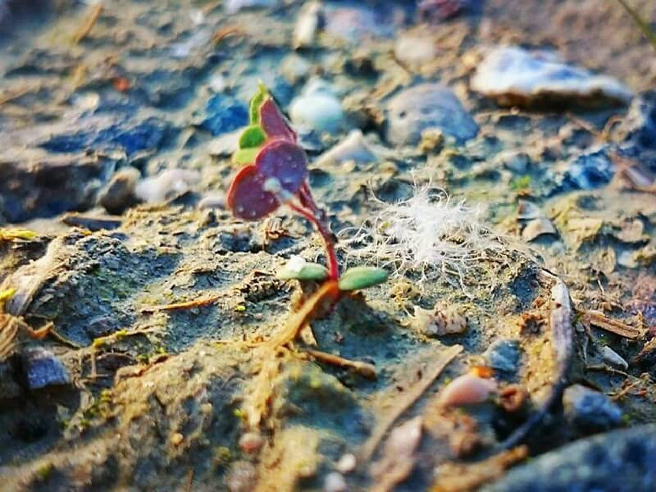 leaf, autumn, selective focus, change, nature, day, dry, fallen, outdoors, no people, close-up, maple leaf, beauty in nature, maple, fragility, animal themes