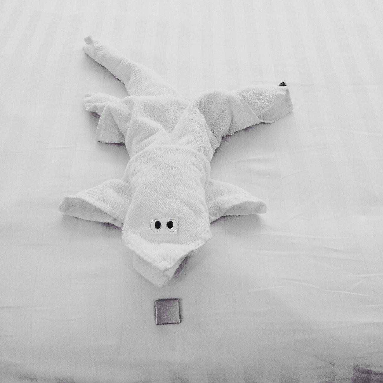 Blackandwhite Towel Animal Hotel Room Chocolate