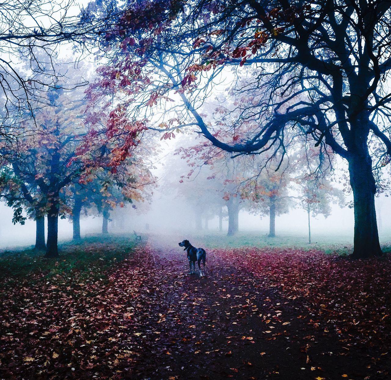 London Lifestyle Ealing Parks London