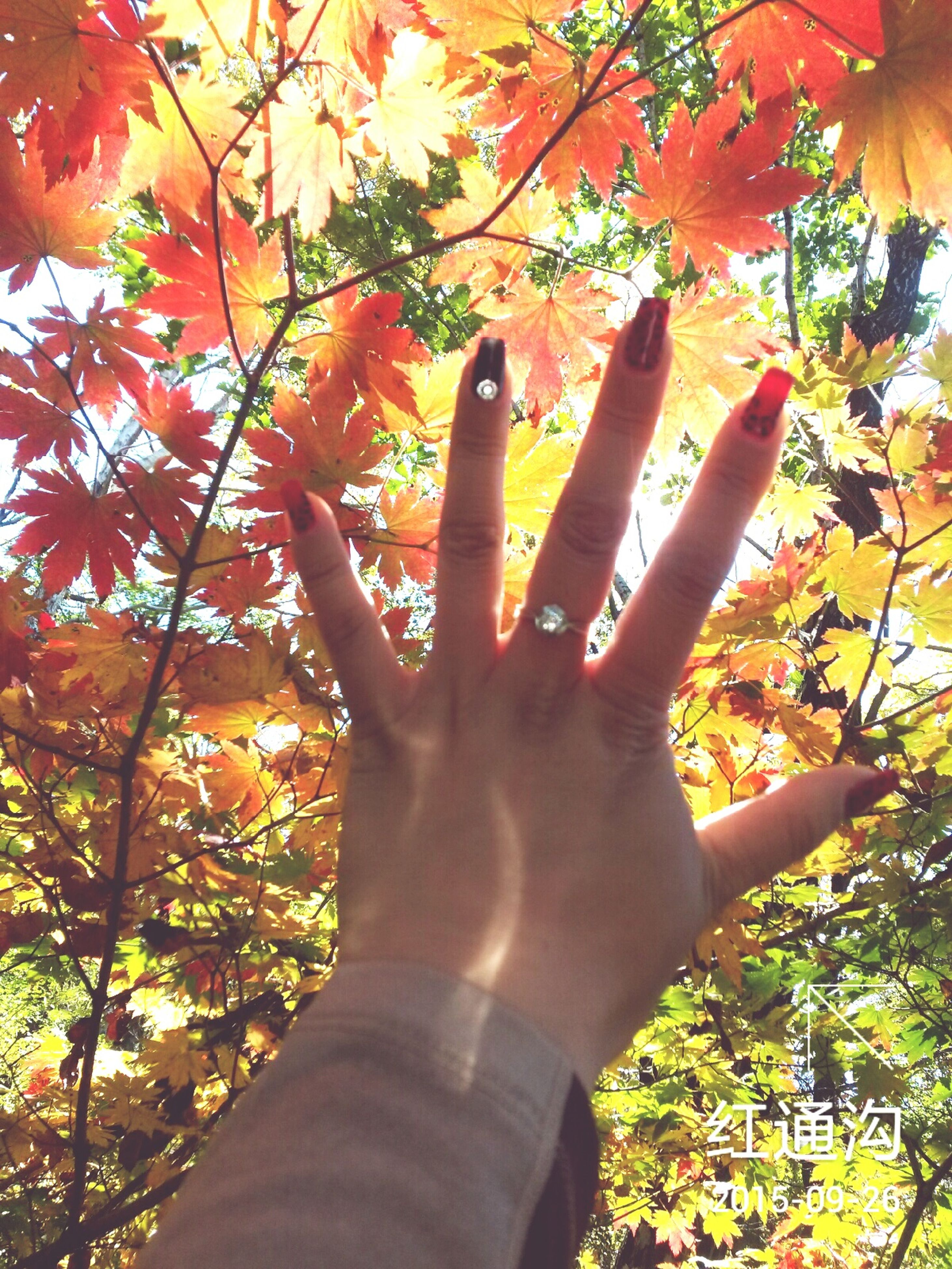 person, tree, part of, personal perspective, holding, human finger, cropped, orange color, branch, low angle view, growth, unrecognizable person, lifestyles, nature, leaf, sunlight, close-up