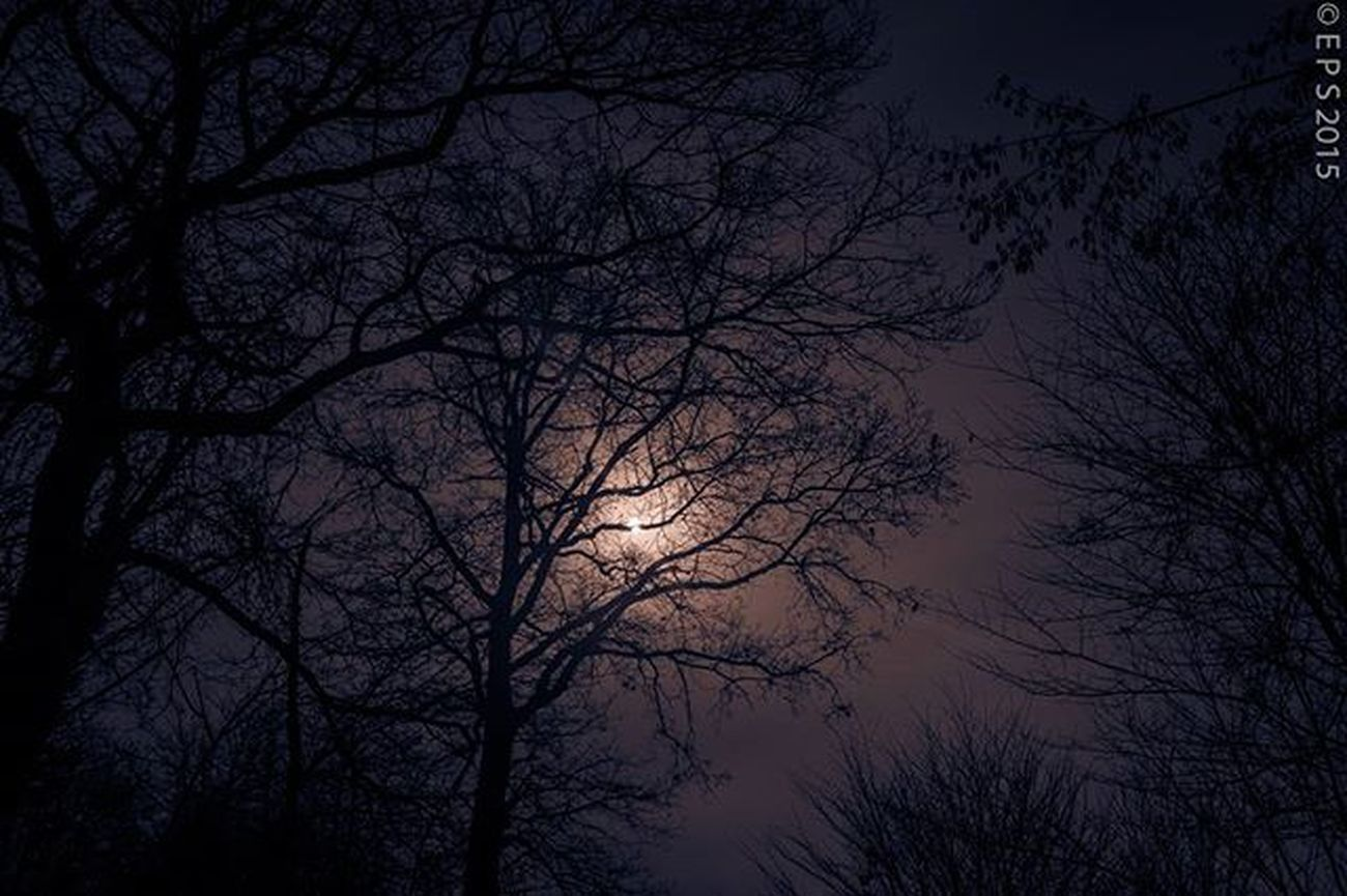 Saarland Nebel Fogg Foggy Landscape Landschaft Landschaftsfotografie Blackandwhitephotography Sunset Winter Germany Deutschland Edgaralanpoe Mystery