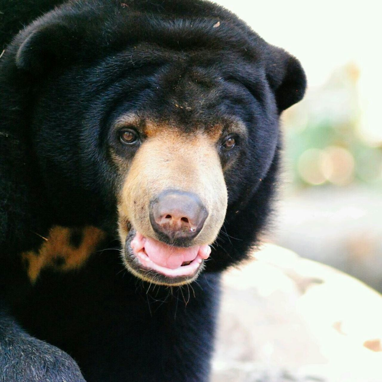 Beautiful stock photos of bear, Animal Head, Animal Mouth, Animal Themes, Animals In The Wild