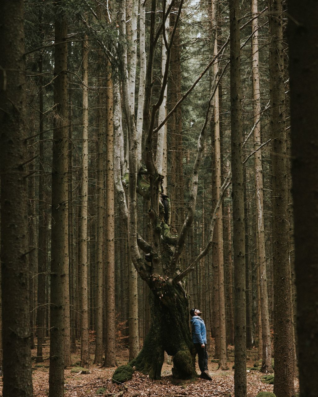 View Of Man Standing By Tree Trunk In Forest