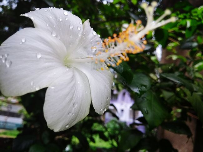 Fragility Water Drop Nature Flower Wet Close-up Freshness Day Beauty In Nature Outdoors No People Flower Head Sommergefühle