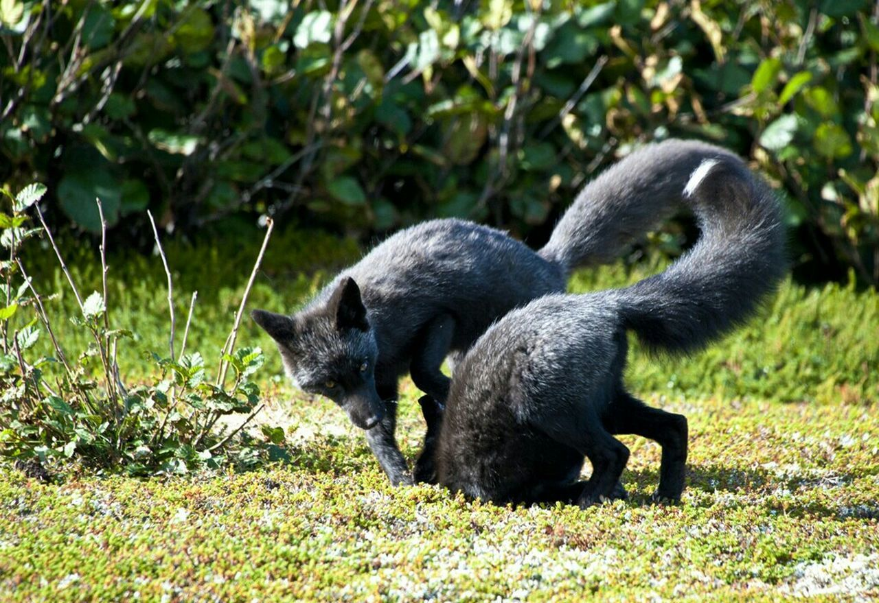 Beautiful stock photos of fox, NULL