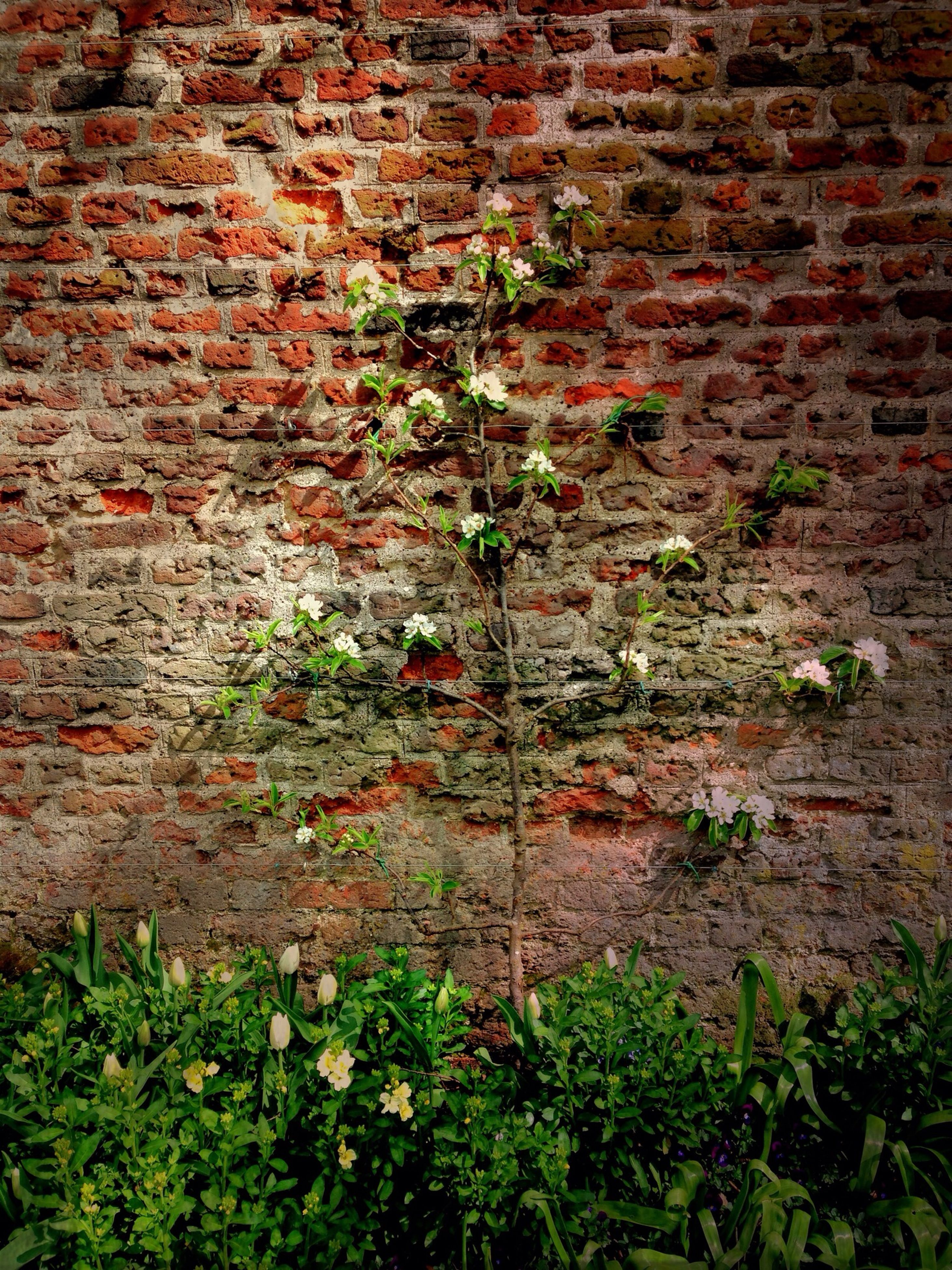 plant, growth, brick wall, wall - building feature, leaf, red, built structure, ivy, architecture, building exterior, stone wall, nature, day, outdoors, growing, no people, full frame, green color, wall, textured