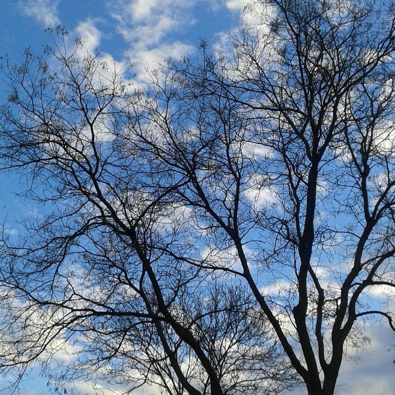 Aşkgökyüzünde Nature Bluesky