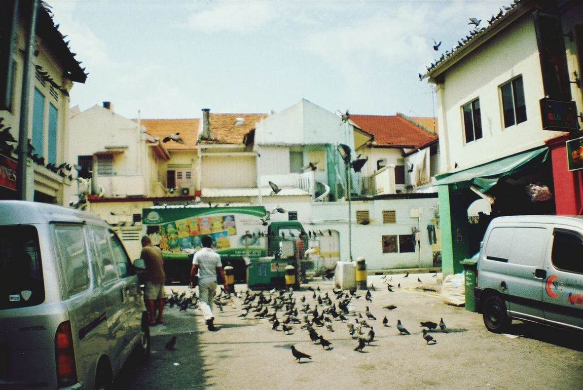 La Sardina Filmisnotdead 35mm Film Photography Your Design Story The Great Outdoors - 2016 EyeEm Awards Singapore The Street Photographer - 2016 EyeEm Awards Street Photography Keep Film Alive Analog Analogue Love Analogue Vibes Film Camera Analogue Photography Analog Camera Little India Nature Photography Pigeons Life Life Of Pigeons Nature's Diversities