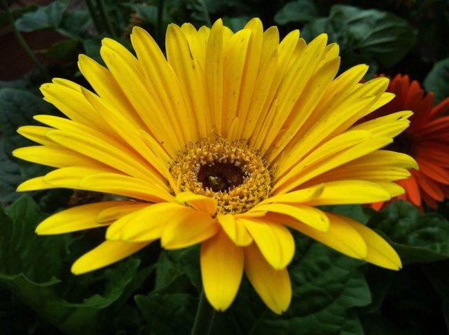 Planten Un Blomen Yellow Flower Flowerporn Flower Collection Darkness And Light Mood Nature Photography EyeEm Best Shots - Nature Jopesfotos - Nature Jopesfotos - Bestefotos
