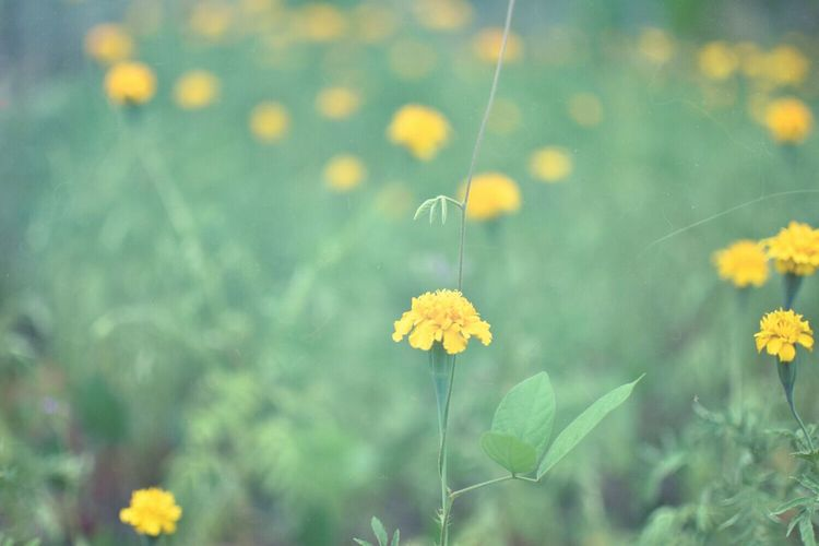 Nature Flowerporn