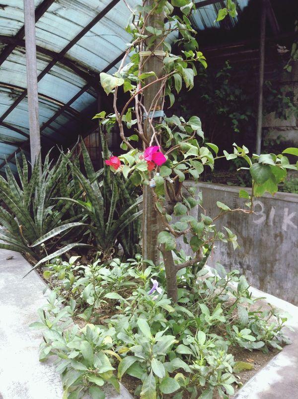 Flowers :) Enjoying Nature