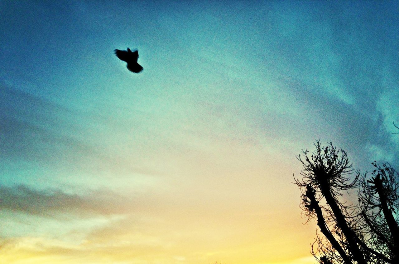 sky, silhouette, low angle view, flying, no people, animal themes, one animal, bird, outdoors, nature, day
