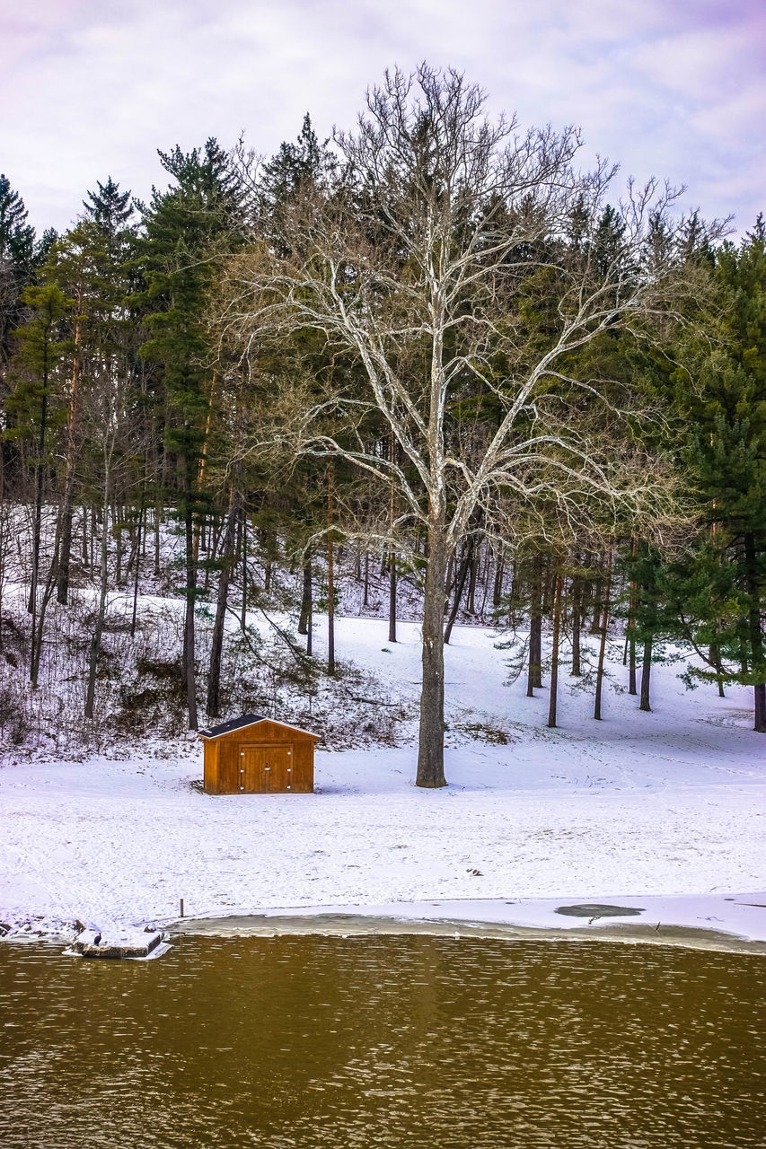 winter, snow, tree, cold temperature, nature, tranquility, weather, tranquil scene, beauty in nature, bare tree, landscape, scenics, cold, outdoors, sky, no people, day, branch