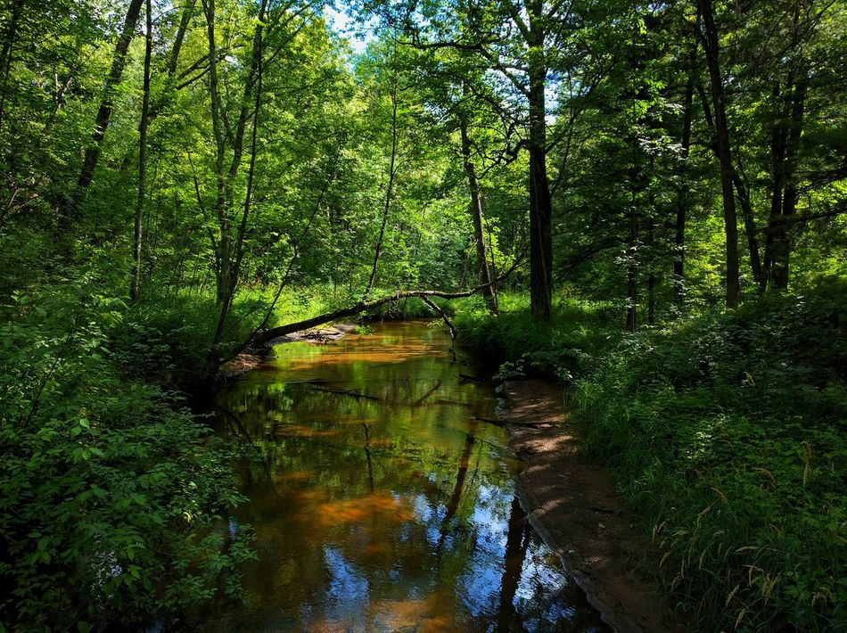 Camping Forests Hike Park Wisconsin Woods Forest Creek Stream