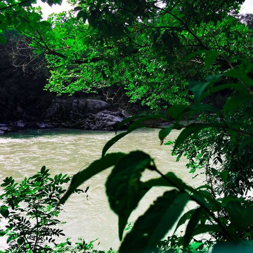 You drown not by falling into a river, but by staying submerged in it. Paolocoehlo Japan (null) Japan Photography River Nagatoro Nature_collection Nature Photography Photography Nature