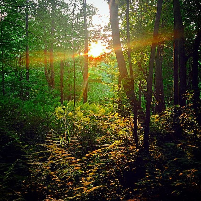 Went for a little hike today after work. Saltsprings Upstate Summertime Hudsonsummer sunset forest picoftheday scenic wildlife hike hiker pattrails