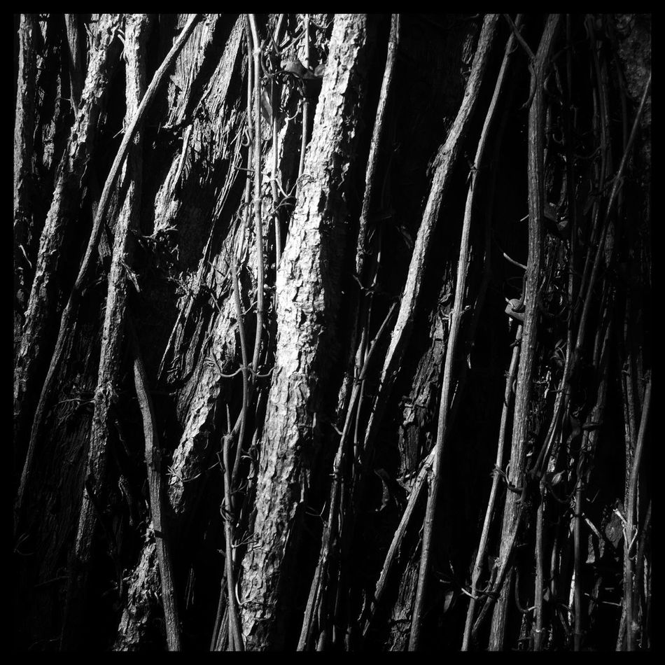 Monochrome Photography Tree Trunk Nature Beauty In Nature Shadow Pattern