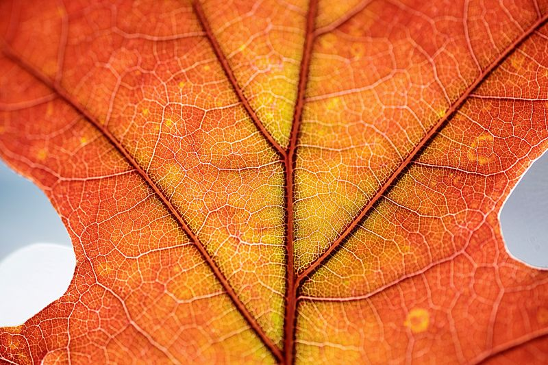 Take the time to see what is right in front of you. Leaf Vein Leaf Close-up Season  Natural Pattern Change Dry Autumn Auto Post Production Filter Extreme Close-up Nature Beauty In Nature Backgrounds Aging Process Orange Color Full Frame Natural Condition Damaged Botany Growth Maximum Closeness