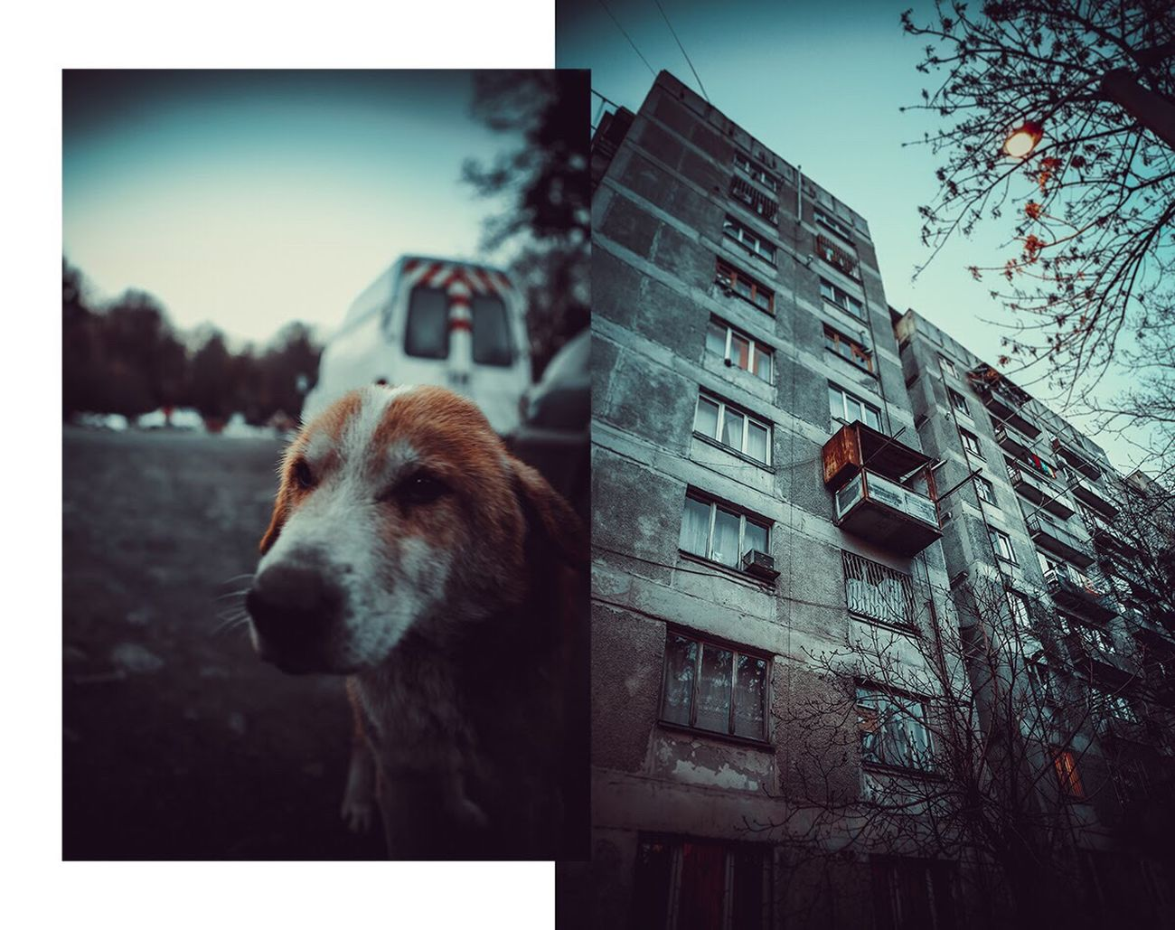 Animal Themes Building Exterior Domestic Animals Day Outdoors Sky Tbilisi