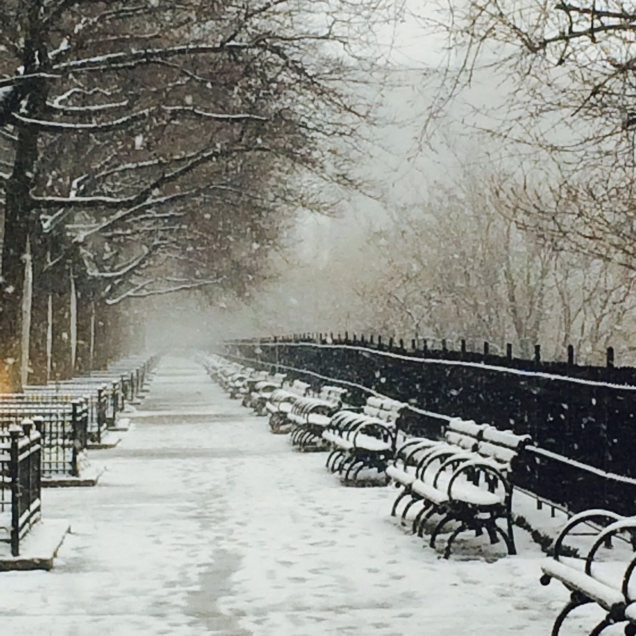 Snow ❄ Benches Park New York City New York Harlem  Winter Blizzard Edgecombe Sugar Hill Hamilton Heights